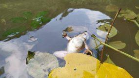 যে কারণে মাধবকুণ্ডে মরে যাচ্ছে জলজ প্রাণীরা