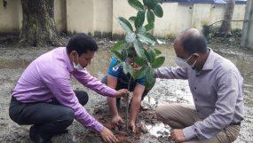 লালমোহন উপজেলা ভূমি অফিসের বৃক্ষ রোপণ