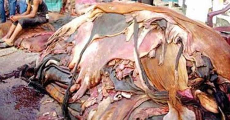 চামড়া মুল্যের দরপতন, কওমী মাদ্রাসার বিরুদ্ধে গভীর ষড়যন্ত্র: মোহাম্মদ অলিদ সিদ্দিকী তালুকদার