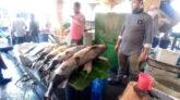 ৪৫ কেজি ওজনের বিশালাকৃতির বাঘাইড় মাছের দাম ৭৫ হাজার টাকা