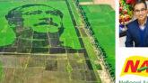 বিশ্বের সবচেয়ে বড় শস্যচিত্র বাংলাদেশের